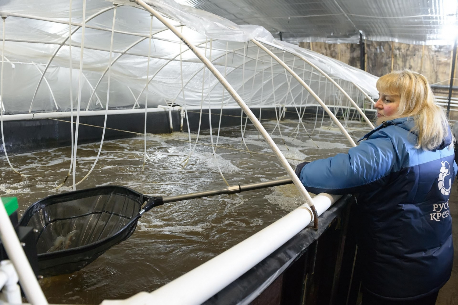 The Russia's largest shrimp farm was opened in Kaluga Region